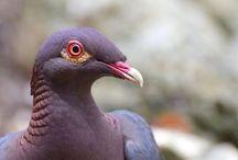 Barbados Birds