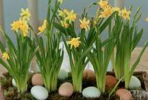 Påske og våren er her<3