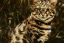 Cats<3 / Sooo many reasons to love cats