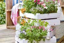 Kistengärtnern / Alles was man in Kisten und großen Kübeln pflanzen kann ...