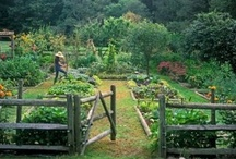 fruit & vegetable garden