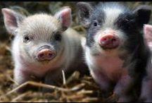 ❦❦ Baby animals ❦❦ / Baby animals