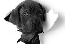 Cachorros - Puppys