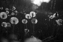Black__white / Photos...art...infography....