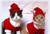 ❆ 2 ∂αyʂ ɬiℓℓ cɦɽiʂʈɱαʂ ❆ / Tiny paws & claws waiting for Christmas..