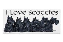 Scootie Terrier