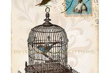 cage oiseaux 鳥と籠 / bird cages