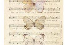 butterfly 蝶 /  le papillon