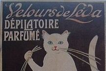 chat dans parfumerie  猫と香水 / cat and perfume
