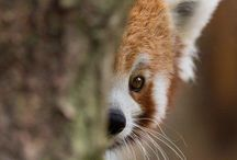 Animales / Vida silvestre