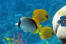 Vida en el océano / Vida en el océano