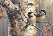 Aves / Aves