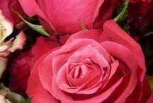 rosor & andra blommor