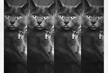 Chats / Toutes les races de chats