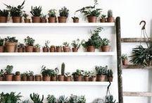 Let your Garden Grow