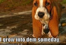 Cute! / Funny!  / by Carolyn W. LeBlanc