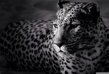 black & white / black&white Photography gallery