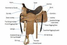 Saddle Charts, Fitting Charts and Tips