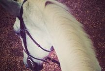 My Passion  / Horse riding.
