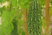 Garden Ideas / Flowers / Nature Decorating / Ikebana, Wabi Sabi , Bonsai, Resources, Tips, Garden Designs / by Denise Thadathil