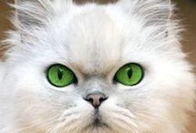 """ Kittens "" / Giant cats"