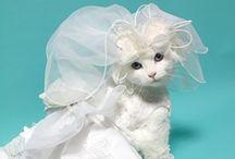 Kitten, Cats and Other Feline Friends / Kitten, Cats and Other Feline Friends