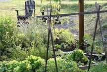 Inkie's garden