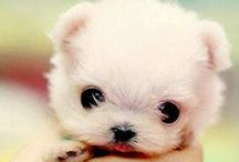 cute animals / you can see the cutes creatures on earth