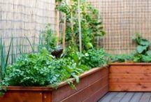 Jardinería :) / Decoración de jardines:)