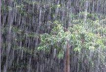 Rain & Rain