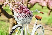 Spring  -Summer