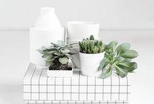 plants / Botanical beauty~