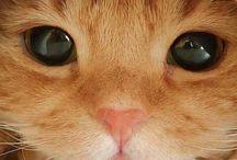 OMG!! So cute!! / Animals I find UNBEARABLY cute!! :)