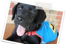 Assistance and Guide Dogs
