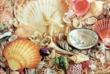 Seashells / Things made with sea shells + other beach related items...