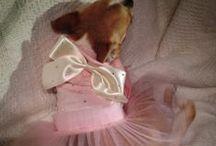 Sparkling dog's dress