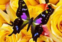 butterflies 와와카지노 Ƹ̴Ӂ̴Ʒ FRK7.TK Ƹ̴Ӂ̴Ʒ 와와카지노 / 와와카지노 Ƹ̴Ӂ̴Ʒ FRK7.TK Ƹ̴Ӂ̴Ʒ 와와카지노 와와카지노 Ƹ̴Ӂ̴Ʒ FRK7.TK Ƹ̴Ӂ̴Ʒ 와와카지노 와와카지노 Ƹ̴Ӂ̴Ʒ FRK7.TK Ƹ̴Ӂ̴Ʒ 와와카지노 와와카지노 Ƹ̴Ӂ̴Ʒ FRK7.TK Ƹ̴Ӂ̴Ʒ 와와카지노 와와카지노 Ƹ̴Ӂ̴Ʒ FRK7.TK Ƹ̴Ӂ̴Ʒ 와와카지노 와와카지노 Ƹ̴Ӂ̴Ʒ FRK7.TK Ƹ̴Ӂ̴Ʒ 와와카지노