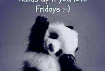PANDA / Pandas!!!!!!