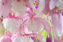 Pink / by Deanna Mastellone