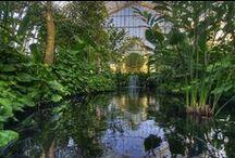 North Garden / North Garden in the Marjorie McNeely Conservatory