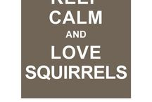 Squirrels / by Rhea Cook