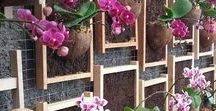Outdoor Projects!! / Projects for the garden, patio or porch!