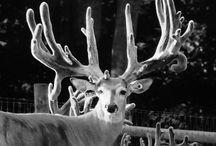 Deer Farming / Photos & info on the biggest breeder bucks in North America
