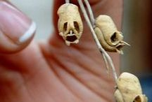 ossa carine / skeletons, skulls, bones and other related stuff!