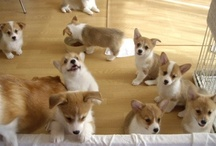 Happiness is a Herd of Corgis / by Erin Wightman