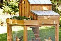 Chiken's house / by Jo S