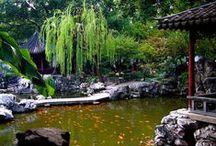 Asijské zahrady / Asian garden, garden design