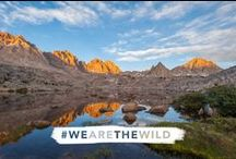 50th Anniversary of the Wilderness Act / This board celebrates 50 years of wilderness protections and the 2014 anniversary of the landmark Wilderness Act. Find out about the act and celebration news and events here.