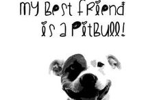 Pitbulls = Love, Faithfulness, Happiness