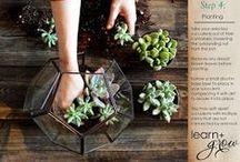 succulent love / succulent terrarium plants
